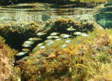 gruppo delphina gallery escursioni sea safari  Palau, Cala Capra Сардиния - Италия