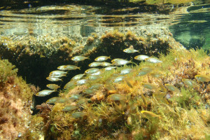 gruppo delphina gallery escursioni sea safari  Palau, Cala Capra Cerdena - Italia